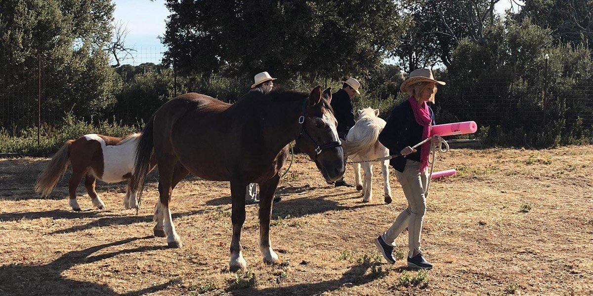 terapias y formaciones mamen coaching con caballos 5